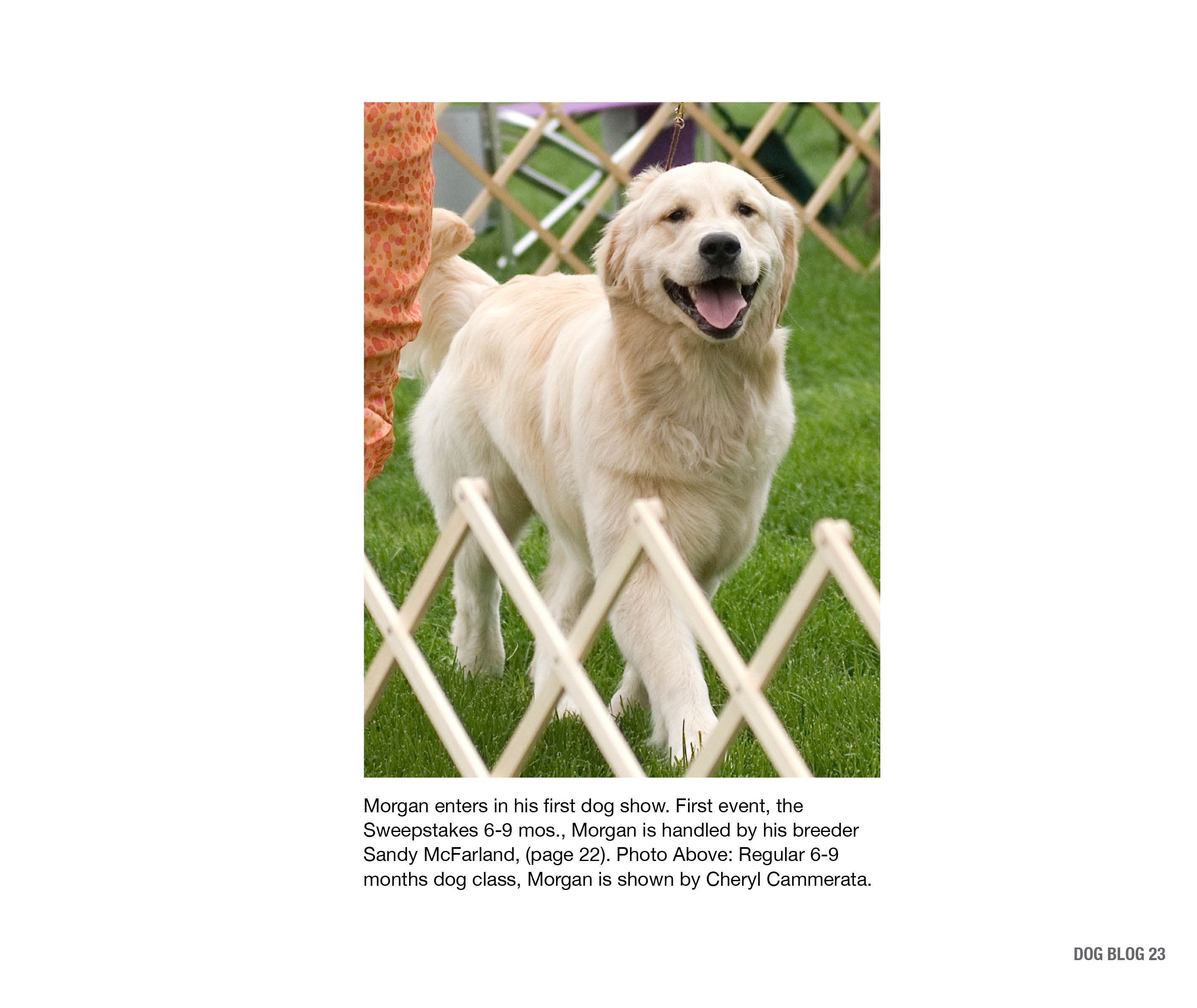 DogBlogPages14