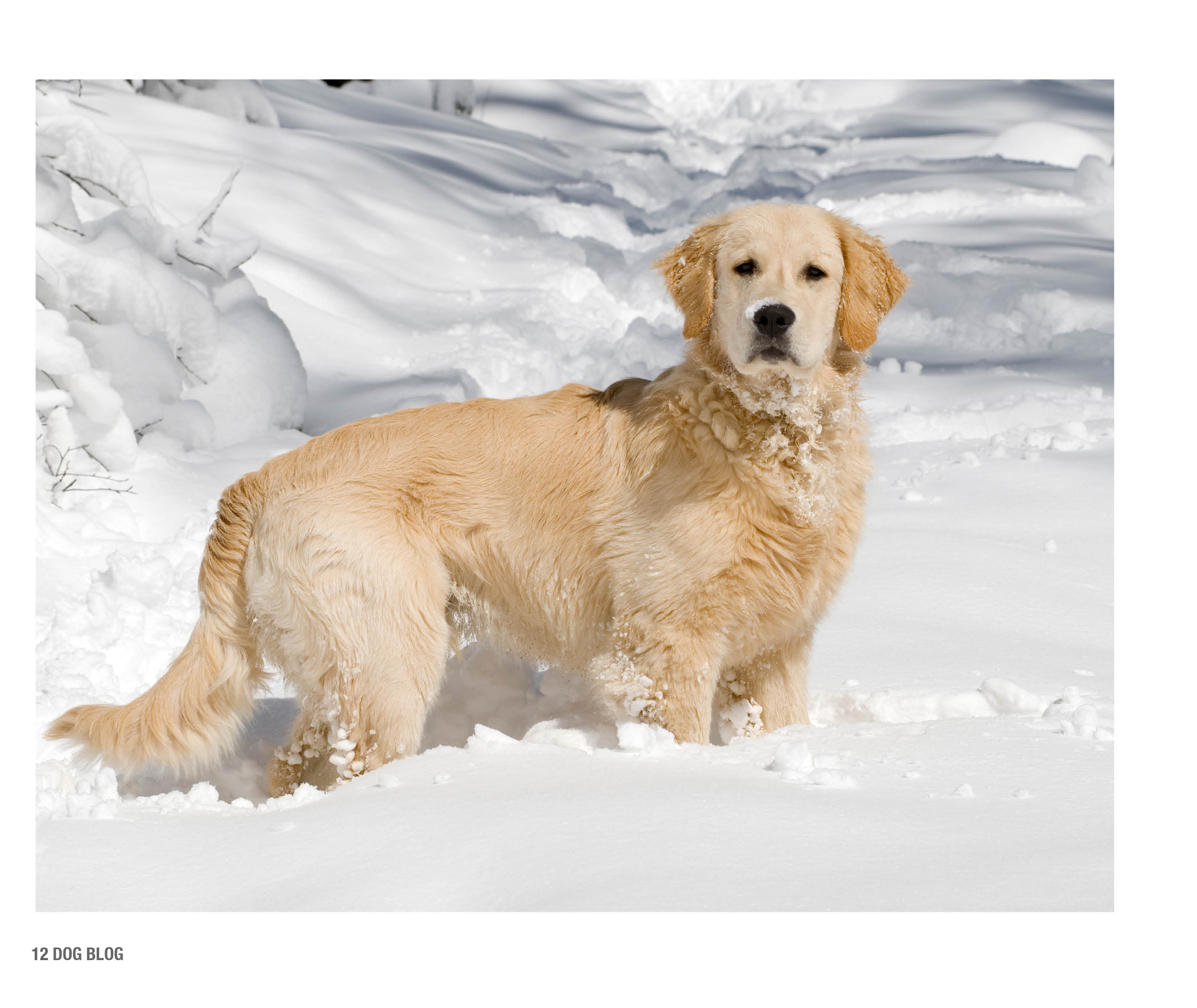 DogBlogPages3