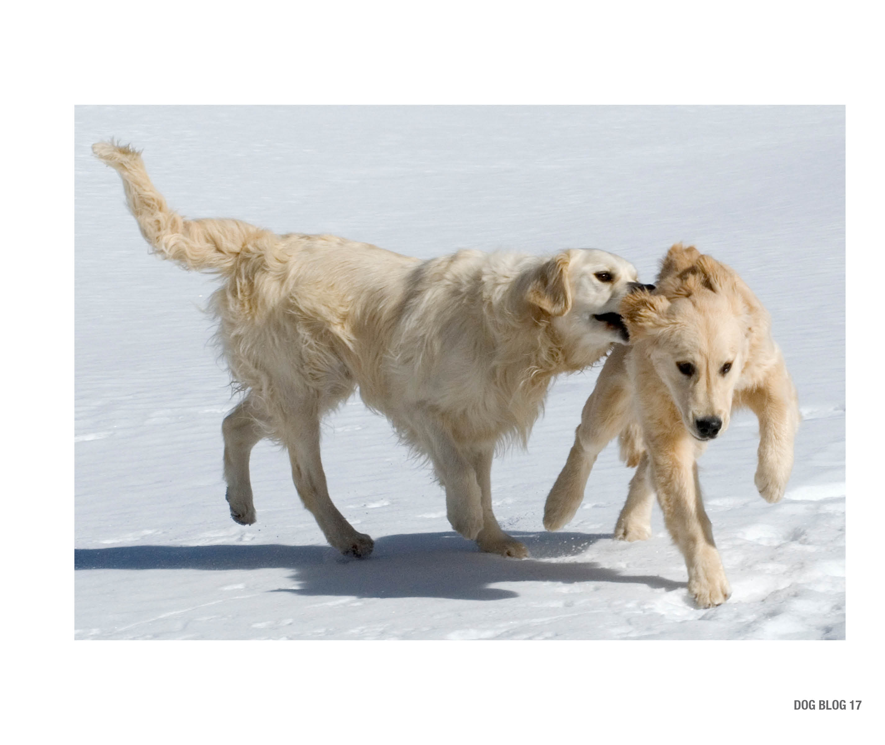 DogBlogPages8