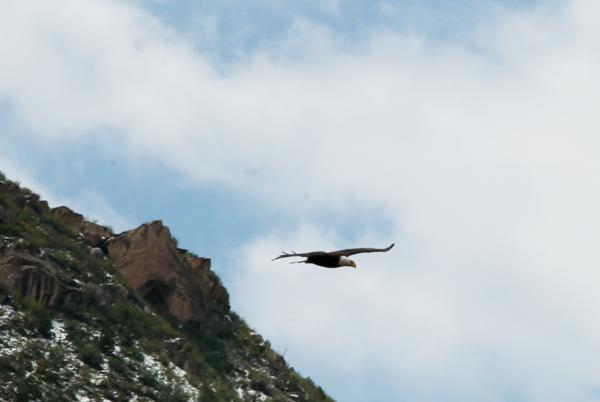 EAGLES (11 of 66).jpg