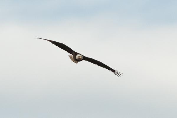 EAGLES (60 of 66).jpg